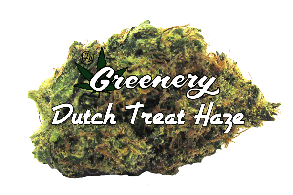 Marijuana Strain - Dutch Treat Haze - Durango CO