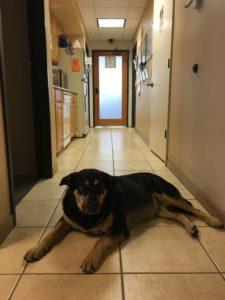 Dispensary, Durango dogs, pot shop, best dispensary in durango