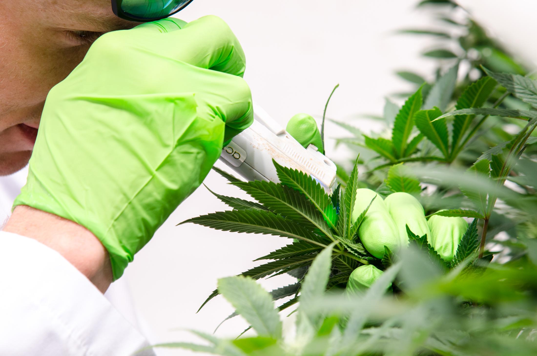 marijuana, dispensary, dispensaries, medical marijuana, marijuana as medicine, marijuana side effects, health