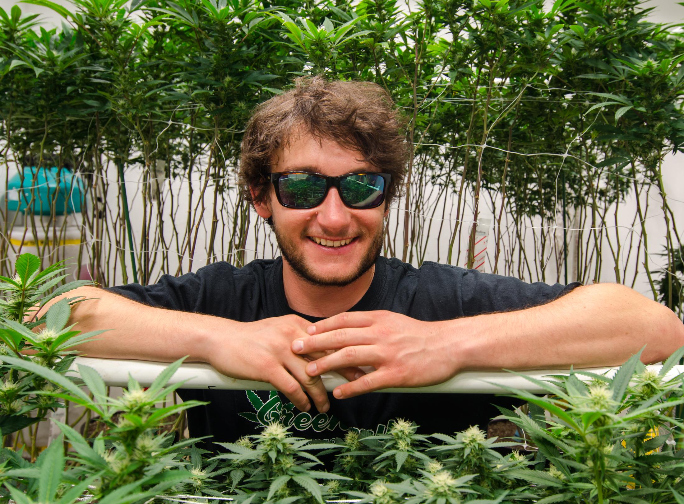 The Greenery Grow, marijuana grow, cannabis, cultivation, Indiana Bubblegum, Pakistani Chitral Kush, Durango weed