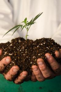 greenery grow, marijuana grow, cannabis cultivation,, durango dispensary, durango dispensaries, weed